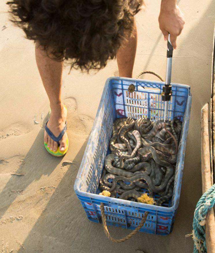 sea snakes trawler maharashtra
