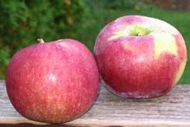 Apple Macintosh 1lb bag