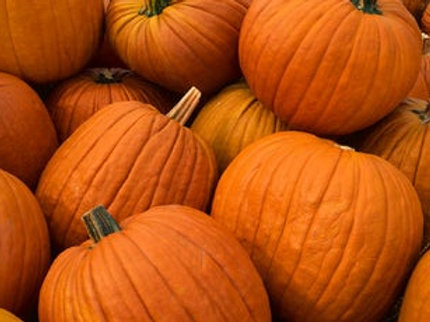 Pumpkin20-25lb each