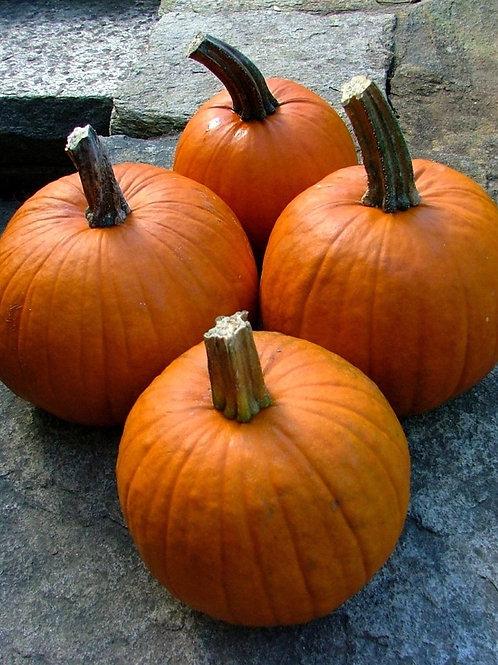 Pie Pumpkins (6-8pcs/box)