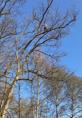 Arbeiten an der Baumspitze