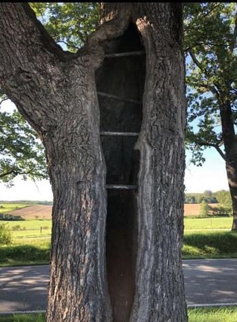 Baum Beurteilung