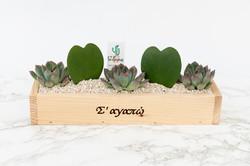 865.Κάκτοι σε ξύλινο κασπώ love
