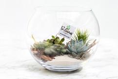 Poulimenos terrarium