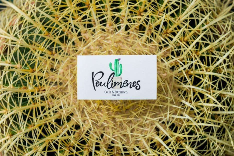 poulimenos echinocactus grusonii