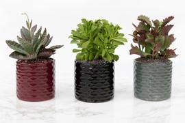 poulimenos succulents
