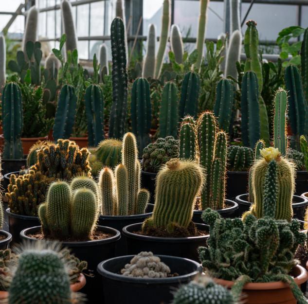 poulimenos.com-large-17-cactus.jpg