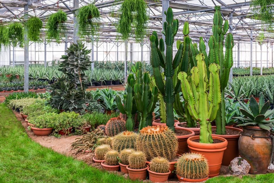 poulimenos.com large cactus