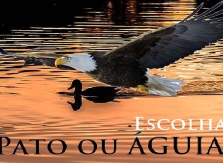 Pato ou águia, o que vc quer ser...