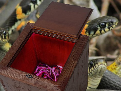 Box with snakes