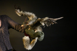 draco meleagris animatronic