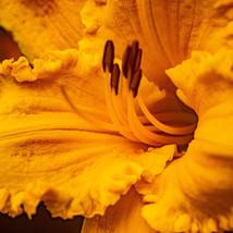 yellow 2 (1 of 1).jpg