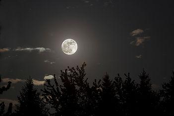 Bright full moon in empty sky over trees