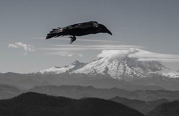 Dark bird in flight over mountain