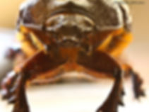 Extreme close-up of a beetle