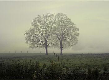 Pair of intertwining trees