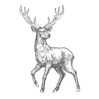 cmbp stag sketch.PNG