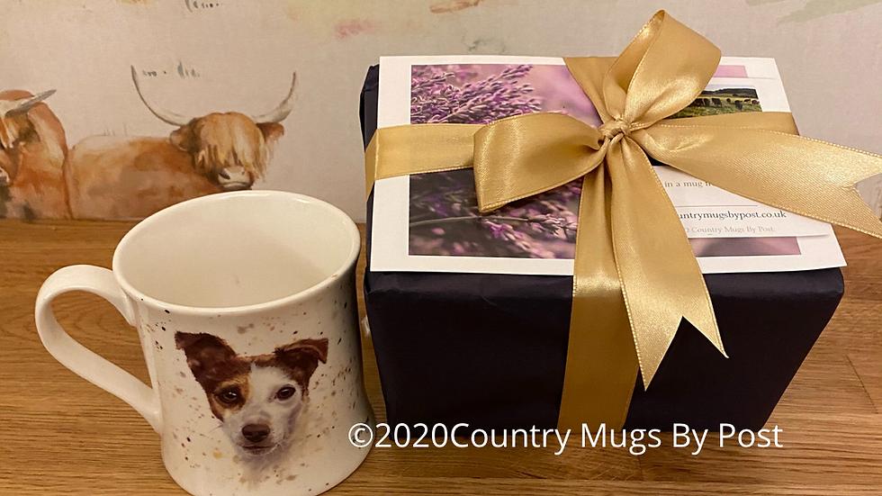 'Jack Russell' Single Mug Gift