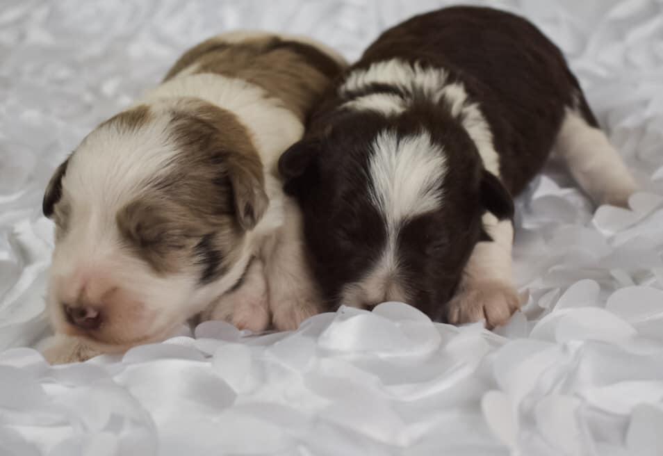 Rileys pups