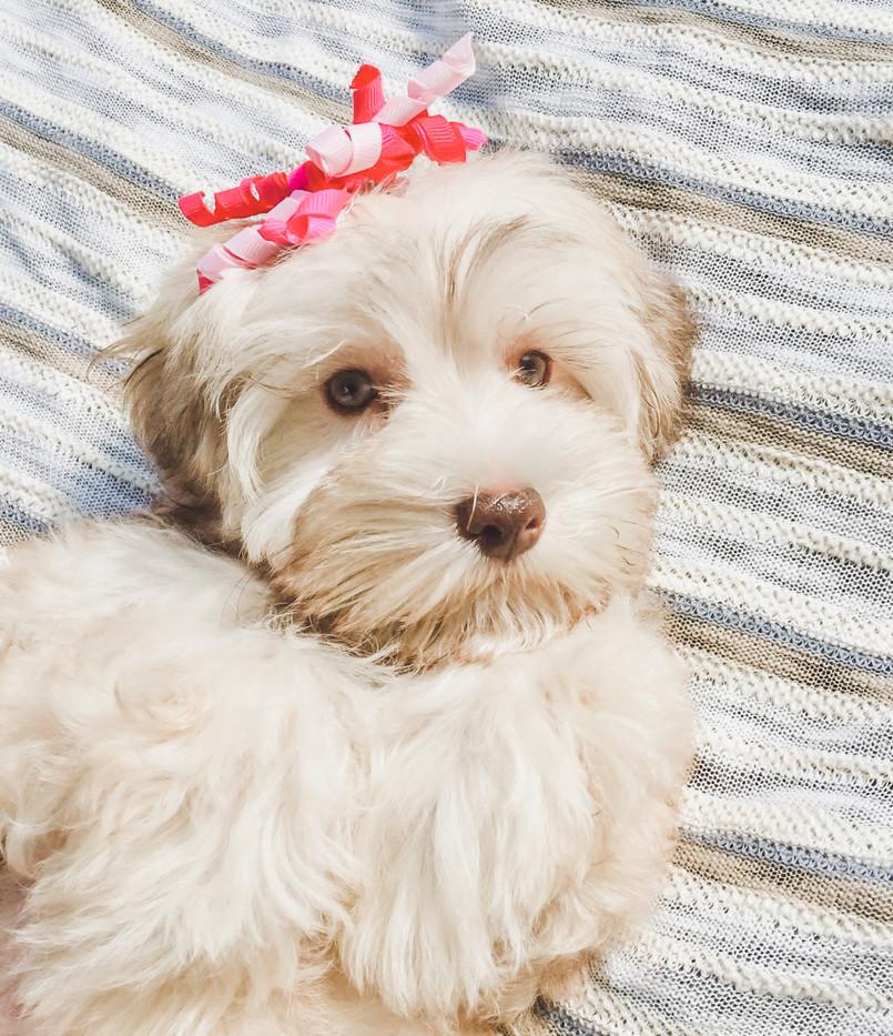 Hazel & Cooper's Pups