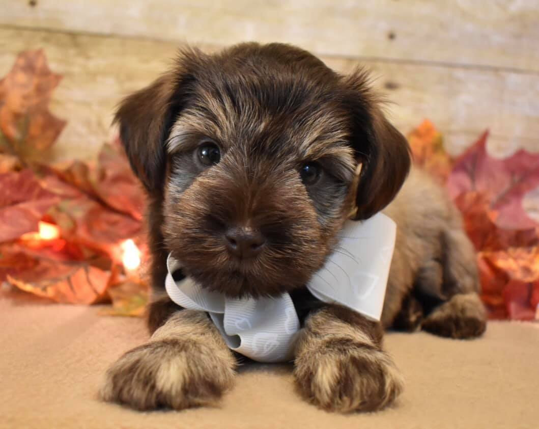 Emma & Paddington's Pups