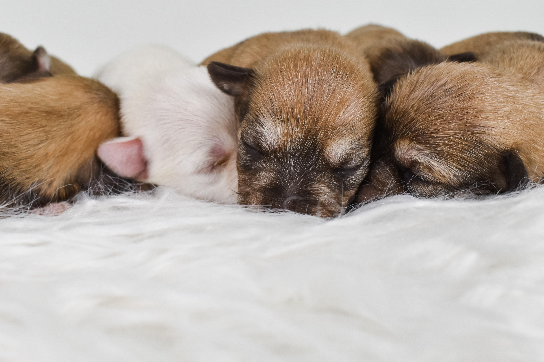Hazel & Coopers Pups