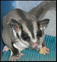 Aussie Kingdom Marsupial.jpg
