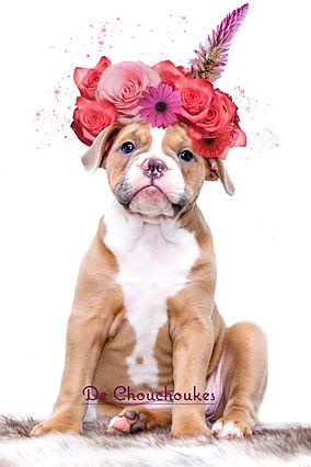 bloemenkrans.jpg