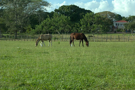 St Pauls Horses
