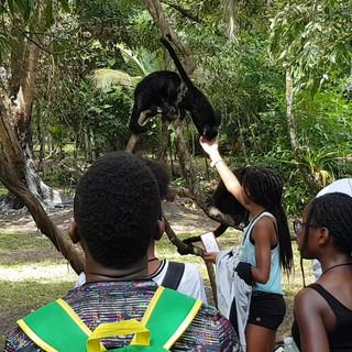 Kids enjoying Belize's Howley Monkeys.mp
