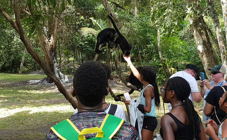 Kids enjoying Belize's Howley Monkeys.mp