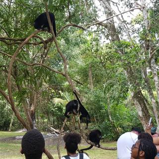family enjoying monkeys in belize