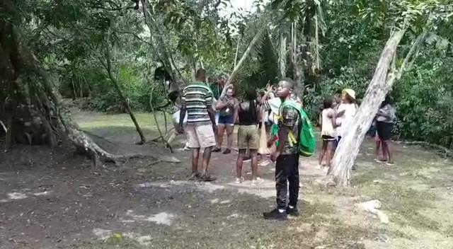 Loud Howler Monkeys in Belize.mp4