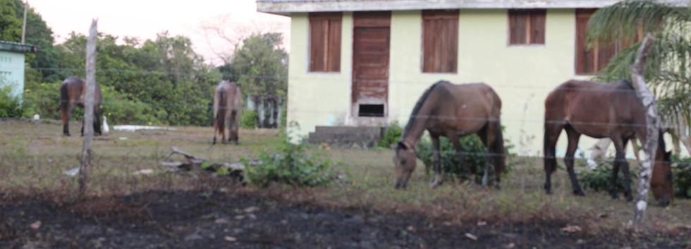 Village Church St Pauls Horse back ridin