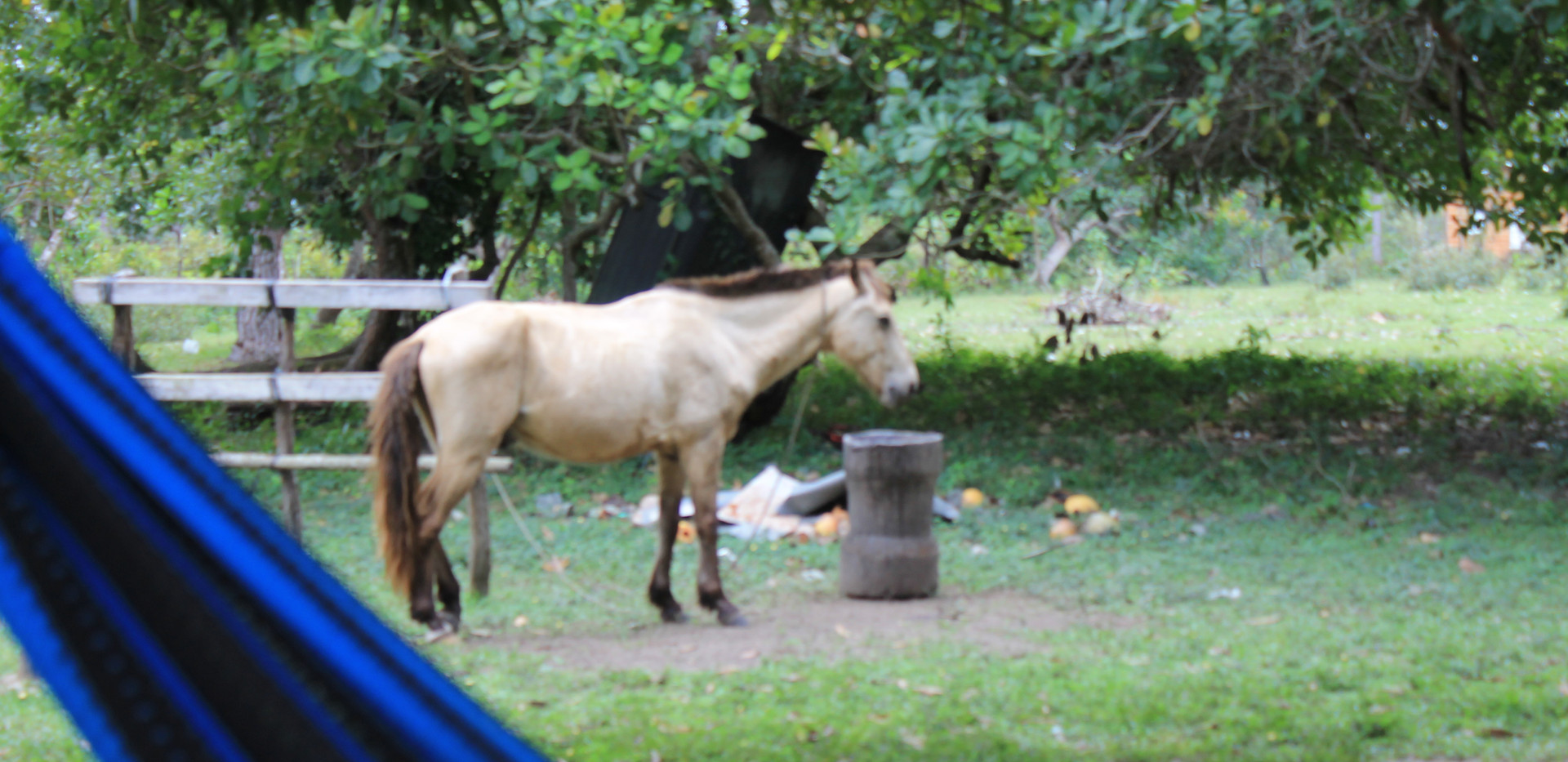 Flash the amazing horse