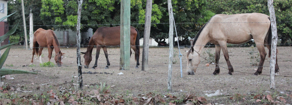 Family of horses, village life