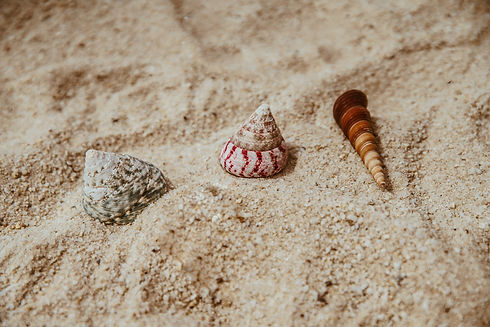 Canva - Three Assorted Sea Shells on Bro