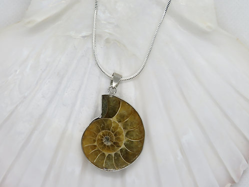 Ammonite Pendant with Silver Chain