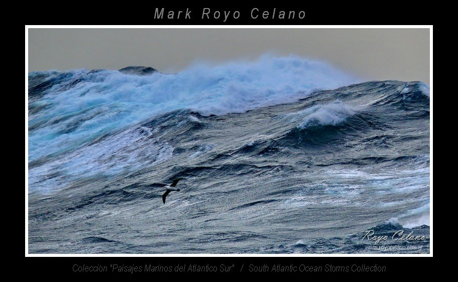 EXPO OCEAN 2013 05 C