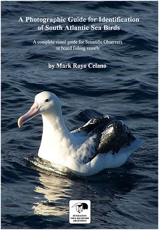 English cover sea birds.jpg