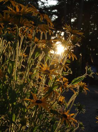 Portfolio_Natur_16.jpg