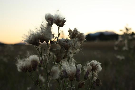 Portfolio_Natur_08.jpg