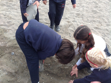 Beach Fun with Year 1