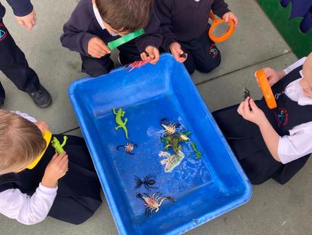 Nursery Discover Minibeasts