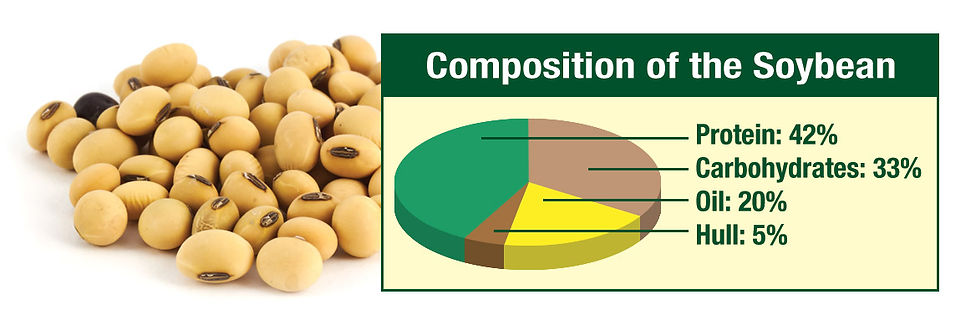 Composition-Soy-Chart.jpg