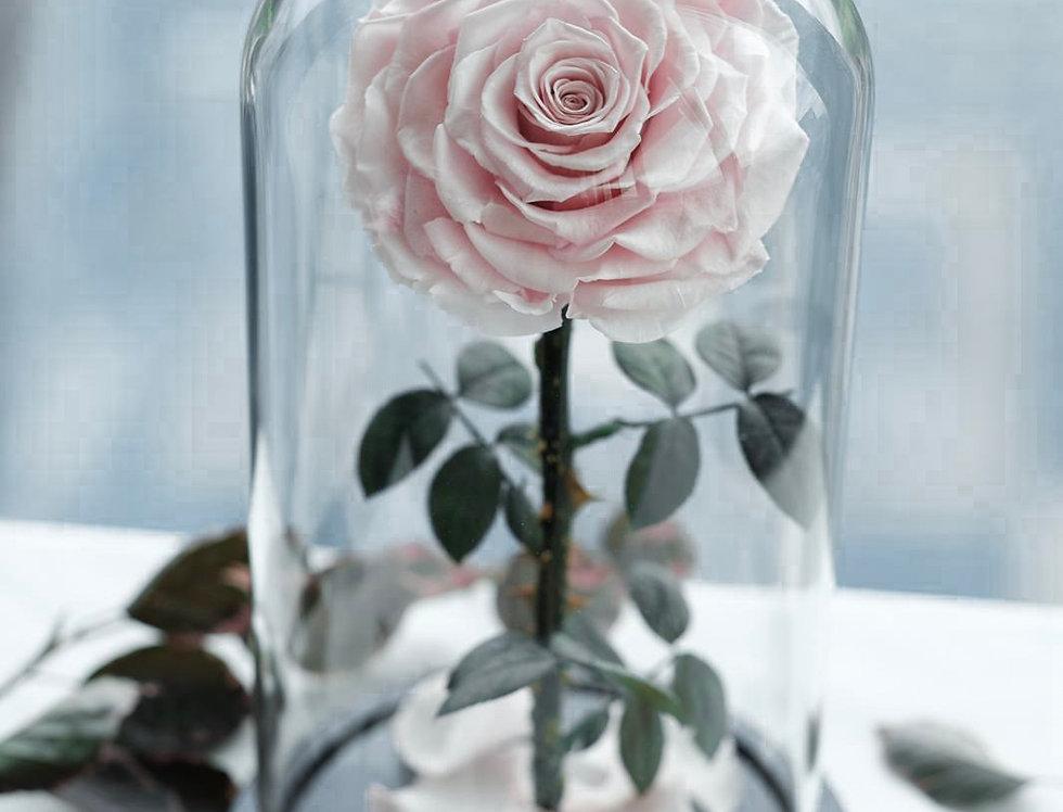 Everlasting Love Rose Dome   200 AUD