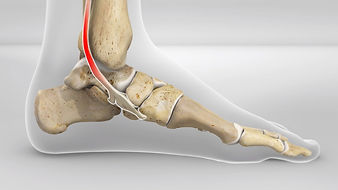Posterior tibial in the foot