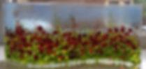Sam Burke Summer Fields.jpg
