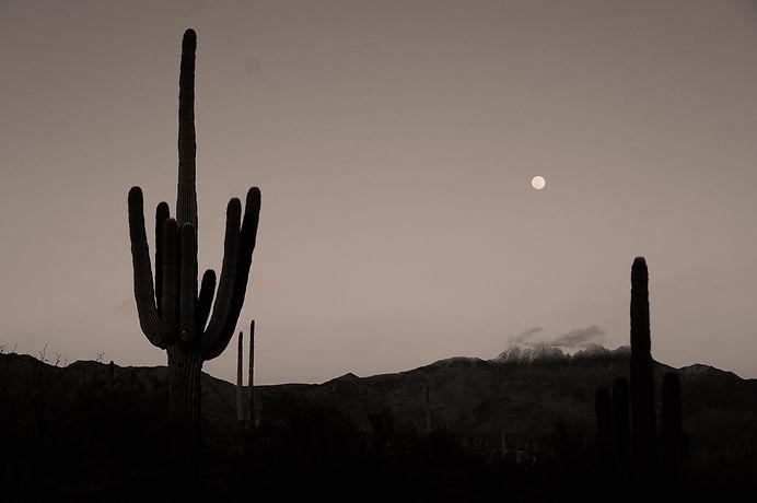 cactus-plant-2180820.jpg