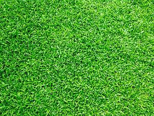 syntheticgrass.jpg